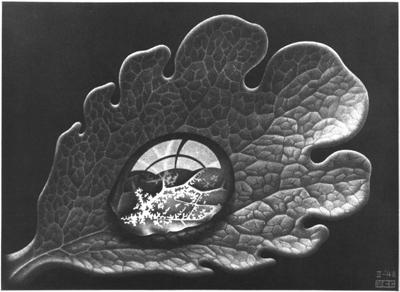 Escher_goccia_di_rugiada